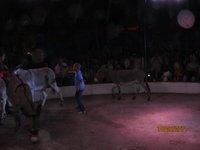 schule zirkus 048